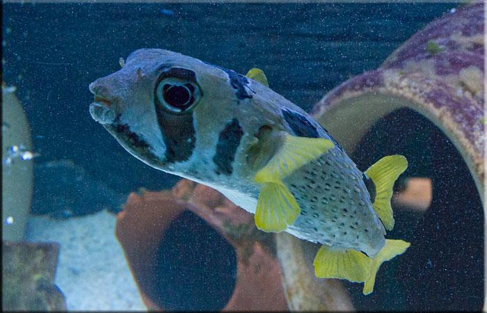Hunstanton sea life sanctuary aquarium for Puffer fish habitat