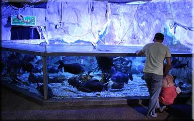Aquarium Hunstanton
