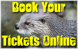BOOK YOUR TICKETS ONLINE