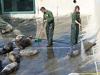 Convalescent Pool being cleaned by Dan and Amy (part of the Animal Care Team)