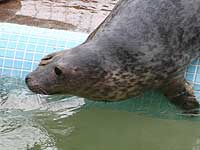 Davy in the outside pool - photo was taken on 20th March 2008