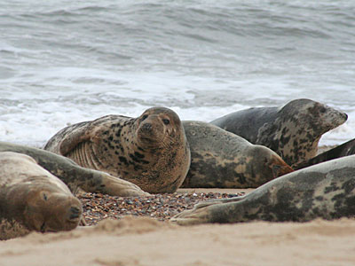 Seals on beach