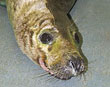 Rescued seal brings some Bolton wonder to the National Seal Sanctuary