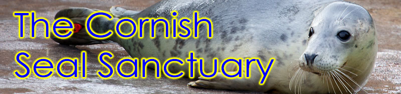 [Cornish Seal Sanctuary]