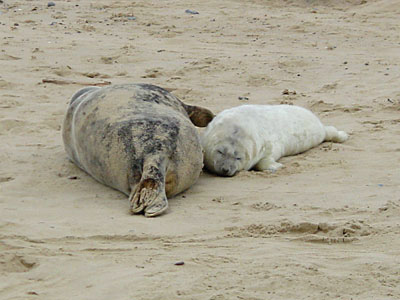 Mother and Pup on beach