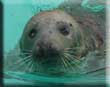 Blind and injured seal washes up on Sanctuary doorstep