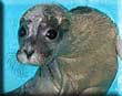 Seal influx prompts appeal by Sanctuary