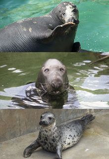 Adopt an Animal at the Cornish Seal Sanctuary