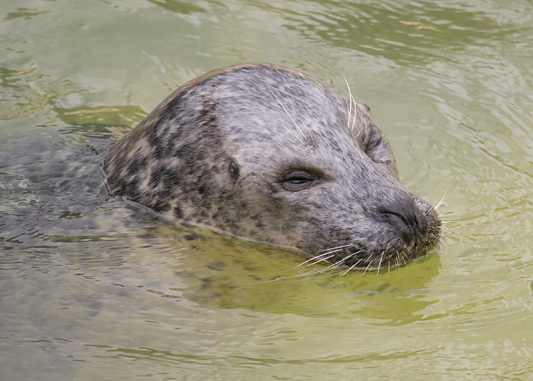 Babyface, Common Seal