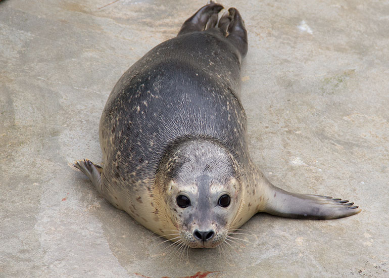 One of the resident seals