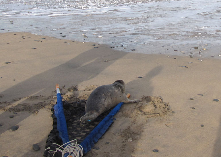 Seal Release - 6th July 2016
