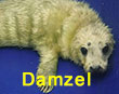 Damzel, a rescued grey seal pup from the 2017/18 season