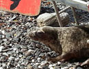 Seal Release - 24th May 2013