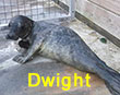 Dwight, a rescued grey seal pup from the 2017/18 season
