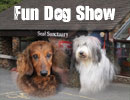 Fun Dog Show with Classes for All