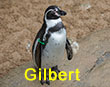 Gilbert - Green Tag - Penguin