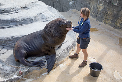 Diego, Patagonian Sea Lion, with Tamara, the Sanctuary´s Curator