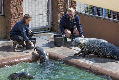 Staff training the resident seals