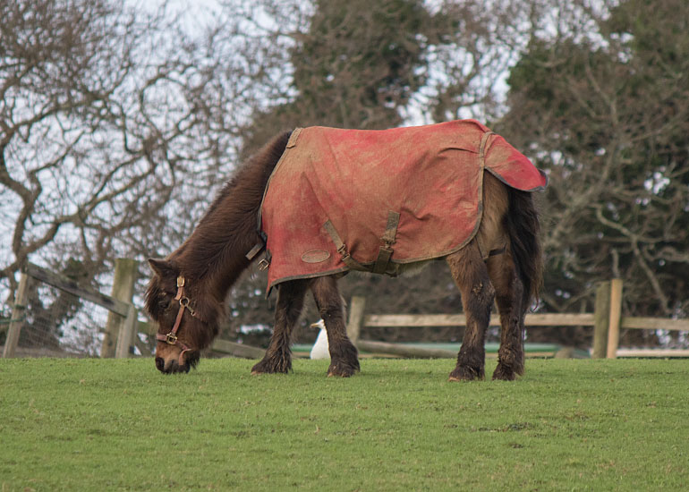 Muffin with his coat on in the paddock