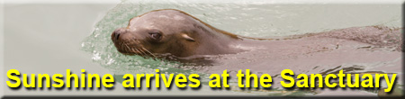 New for 2014 - Sunny, Californian Sea Lion