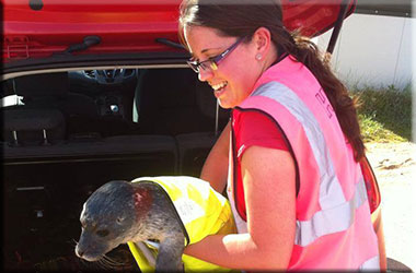 Seal Pup Rescued In High-Vis' Jacket
