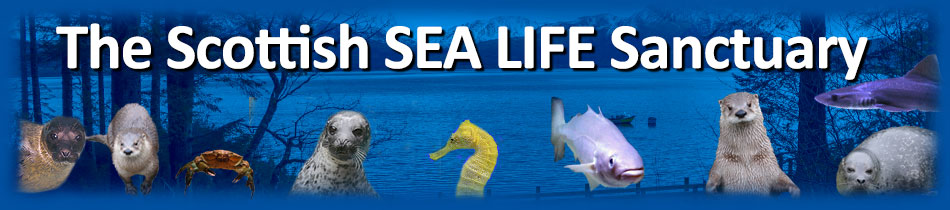 The Scottish SEA LIFE Sanctuary