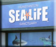 Rescue Mission Underway at Hunstanton SEA LIFE Sanctuary