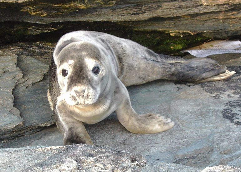 Seal Rescue - 15th September 2016