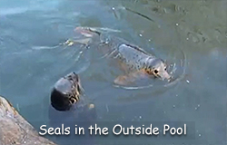Seals in the Outside Pool