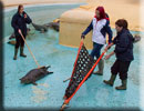 Seal Release on 16th October 2013