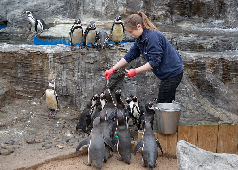 Jemma feeding the Humboldt Penguins