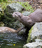 Otters Week 11th - 19th March 2017