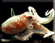 Octopus Survives To Become A Sea Life Star