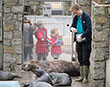 Bad Weather Prolongs Overcrowding Problems at Seal Sanctuary