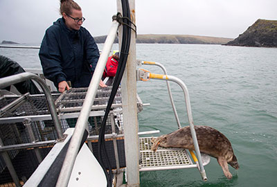 Seal Release - 27th August 2014