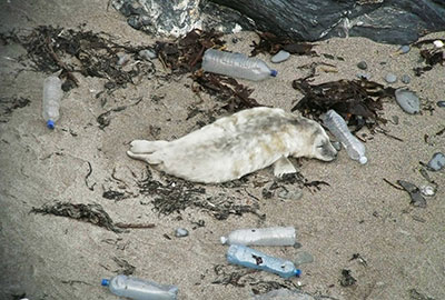 Photo Credit - Sue Sayer of the Cornwall Seal Group Research Trust