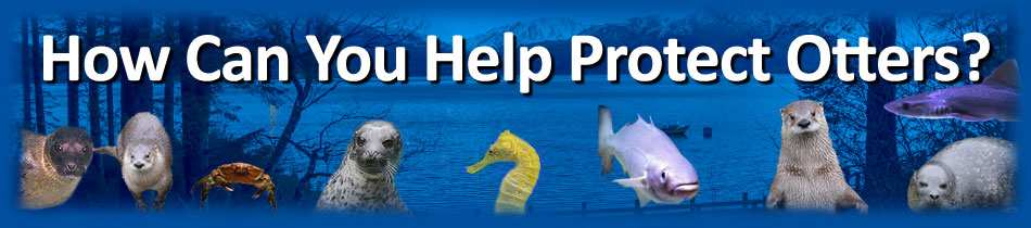 [How Can You Help Protect Otters?]