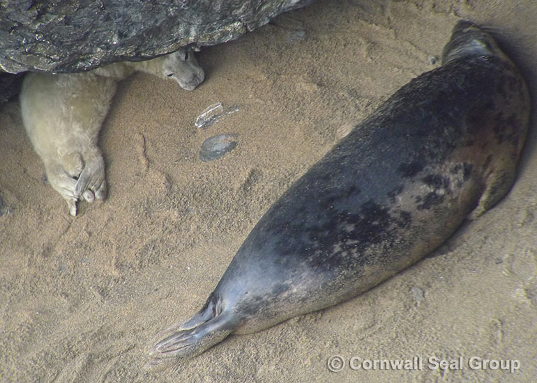 Seals in the wild -  September 2014