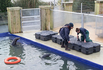 A new pontoon in the Grey Seals pool