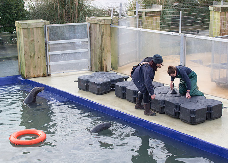 Kelly and Tamara putting together the pontoon for the grey seals