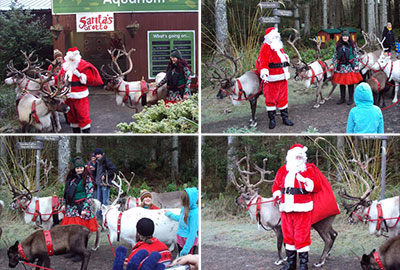 Santa and his real reindeer on 11th December 2016