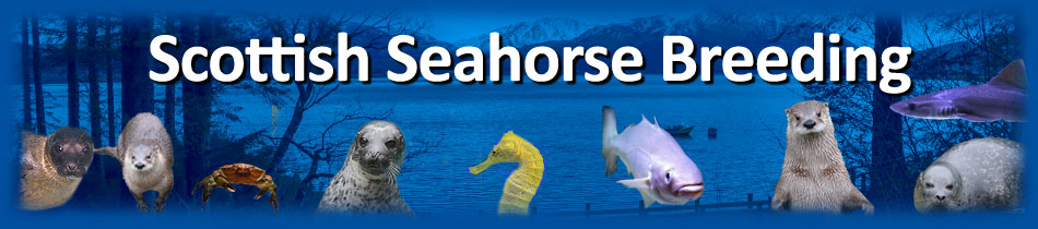 THE SCOTTISH SEAHORSE BREEDING