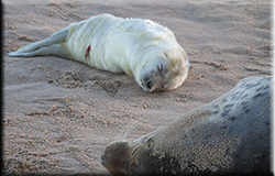 Seal Pups on the beach