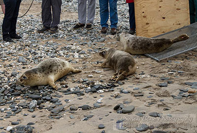 Seal Release - 2nd June 2014