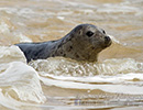 Seal Release - 6th May 2014