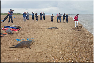 Seal release on 18th May 2016