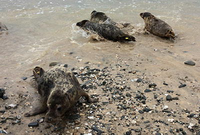 Seal Release - 24th April 2015