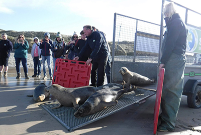 Seal Release - 25th April 2017
