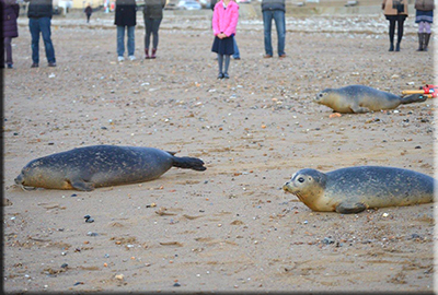 Seal Release on 28th November 2016