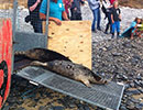 Seal Release - 26th June 2014